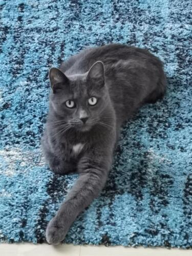 gepflegte katzen 09
