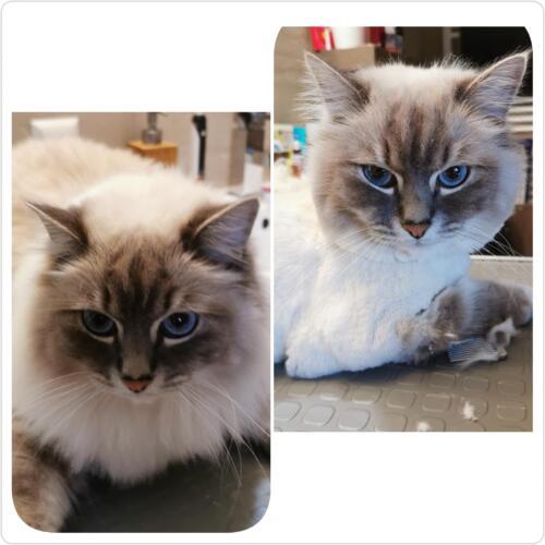gepflegte katzen 13